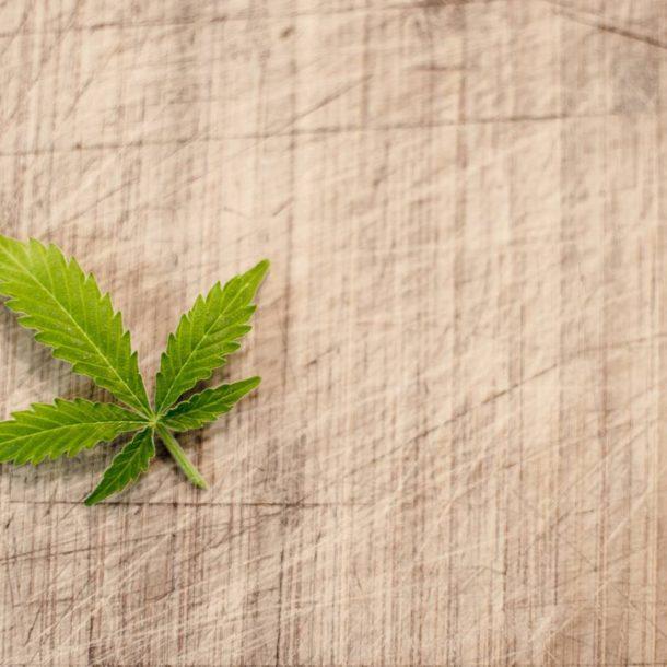 Jak wygląda marihuana lecznicza