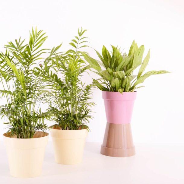 Jak dbać o sztuczne rośliny?